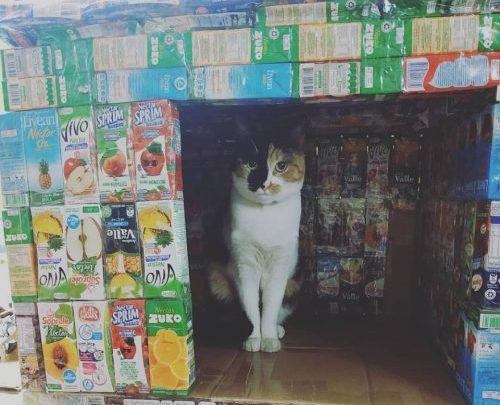 Crianças reciclam caixas de suco e constroem casinhas para cães e gatos de rua